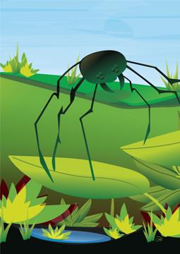 Scan Spider