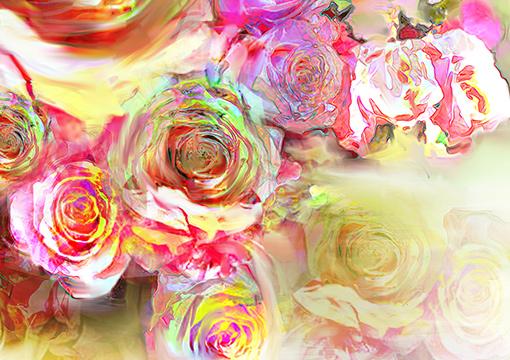 False Chromatic Rose